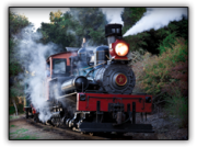Steam train in the redwoods